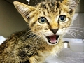 STAR THE CAT IS PARALYZED... BUT HER STORY WILL MAKE YOU CRY OF JOY!  Share
