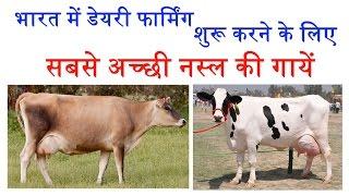 Best Cows for Commercial Dairy Farming in India - इन गायों से शुरू करें डेरी फार्म और बनें करोडपति