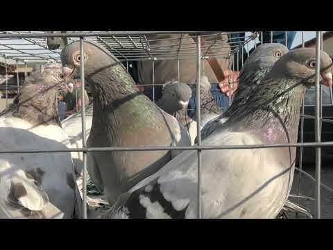 06.10.19. Птичий рынок  г. Прохладный ч1. Poultry bird market ch1.