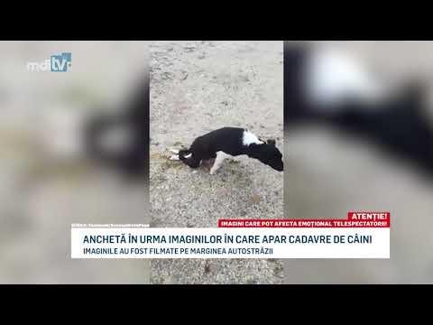 ANCHETA IN URMA IMAGINILOR IN CARE APAR CADAVRE DE CAINI YOUTUBE