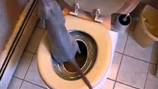 Кошка ходить в туалет на унитаз. Система