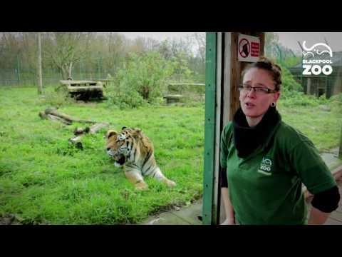 Animal Experiences at Blackpool Zoo