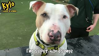 Dogs Trust Manchester - Kylo