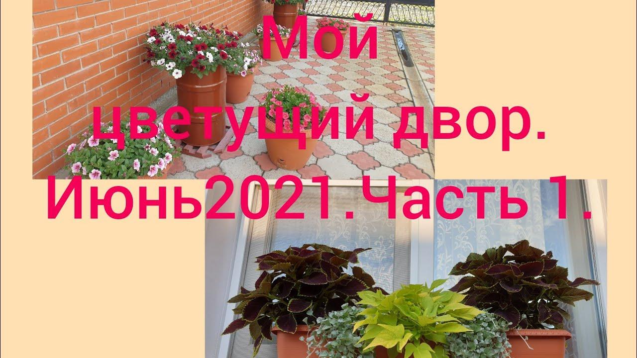 🌺🌼🌸Мой цветущий двор.Июнь 2021.Часть 1.