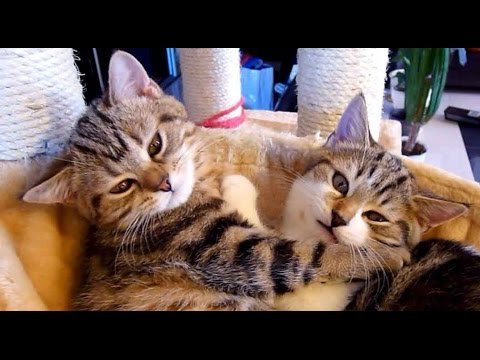 From love to ...?  | Cute and Funny Cats video