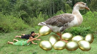 Survival Skills: Primitive Couple Meet Big Goose Laying Gold Eggs - Steal Gold Eggs For Cooking