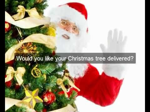 christmas-trees-hamilton-|-hamilton-christmas-tree-delivery-options-|--37.786,175.279