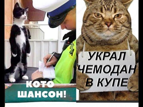🐱Шансон_ Ехал Поезд № 8 Ереван - Баку🎵🎼Chanson Cats!🐱😊