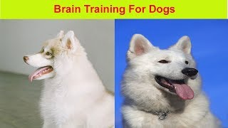 Brain Training For Dogs review | The best dog training program