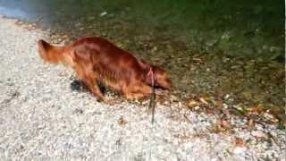 たくさんの鯉さんが近づいてくれました。 神秘的な川・・・ アイリッシュセ...