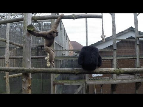 Paul & Lynsey's Zoo Tour 2015 #11 Twycross Zoo - OTTER EXPERIENCE