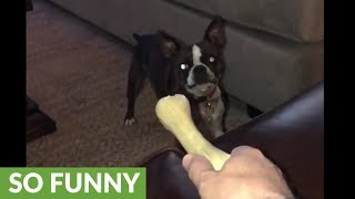 Listen to the crazy sounds this pup makes when it grabs hold of a b...
