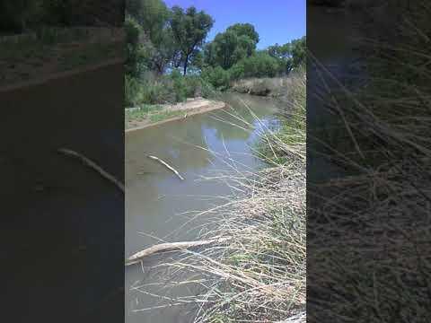 Fishing The San Pedro River
