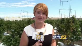 Growers weigh in on potential marijuana ban
