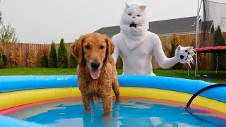 Cat Gives Dogs Bath in Swimming Pool!