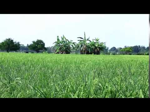 2014 Cagayan Valley's Most Outstanding Integrated Rice Farmer