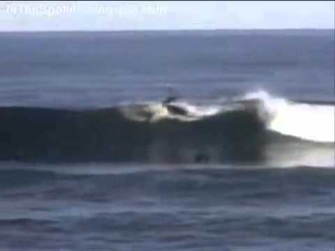 Surfing Shark Attack w...