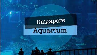 iPad 2 | LumaFusion | Singapore Aquarium 2014