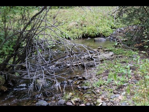 French Creek Ackerman Gold 20 Acre Placer Claim in Montana