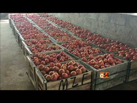 Cardiologist Left her Job To Start a Tomatoes Farm