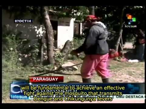 Paraguay issues Dengue epidemic alert
