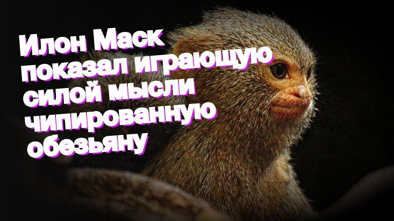 Илон Маск показал играющую силой мысли чипированную обезьяну - YouTube