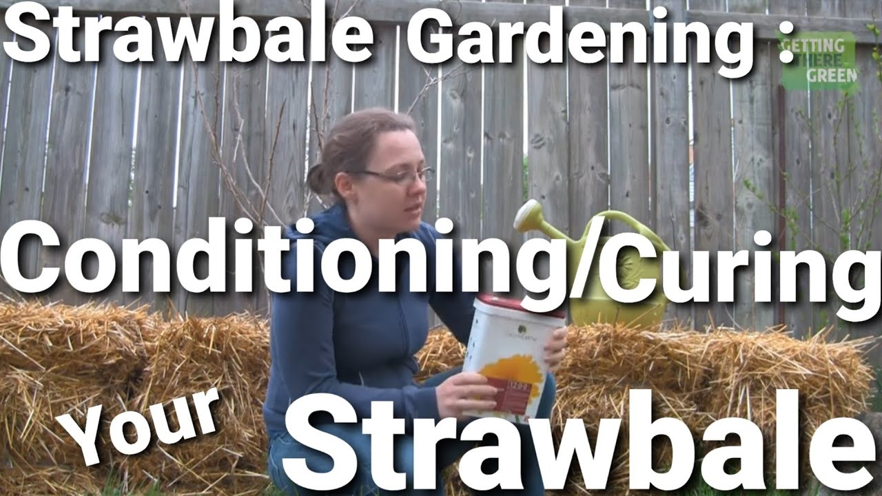 Straw Bale Gardening Start To Finish Conditioning Curing Your Straw Bale Youtube