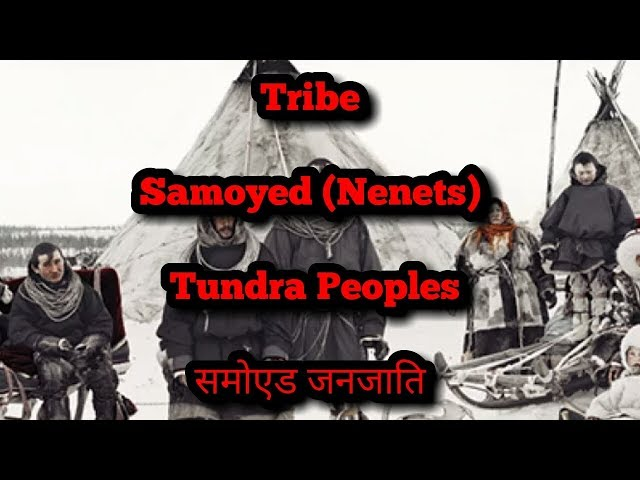 Samoyed (Nenets) Tribe समोएड