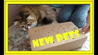 NEW PETS Кого мы купили в зоомагазине ВИДЕО ПРО ДОМАШНИХ ЖИВОТНЫХ
