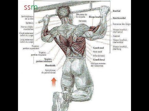 Bodybuilding Back Exercises -How To Build Your Back - YouTube