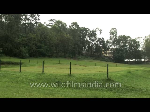 Lush green lawns and pine trees at the Shillong Golf Course
