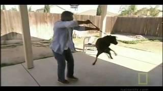Dog Whisperer Got Bitten