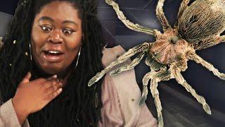 Fiquei trancada em uma sala com uma aranha gigante