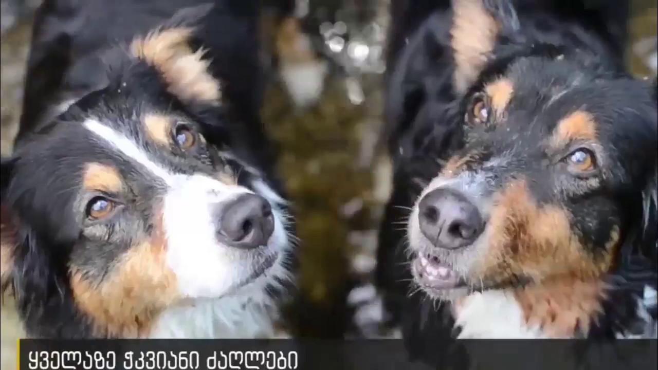 TOP 10 ყველაზე ჭკვიანი ძაღლი