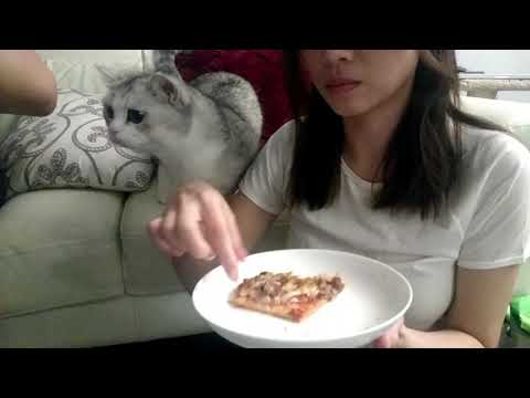 The Woody Show - Pizza Cat Wants Pizza Badly