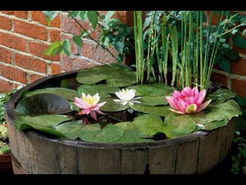 An easy water garden try a pond in a pot youtube for How to water a garden