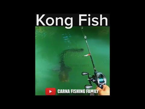 Amazing Catfish Strike 🦍 #fishing #bigfish #silure #shorts
