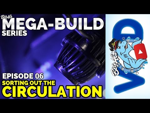 Mega-Build Series Ep 06: Sorting Out the Circulation | BigAlsPets.com
