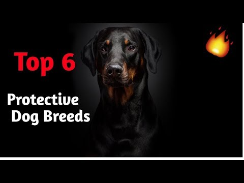 6 Protective Dog Breeds Which You Can Own / At Mix / Best Family Guard Dogs