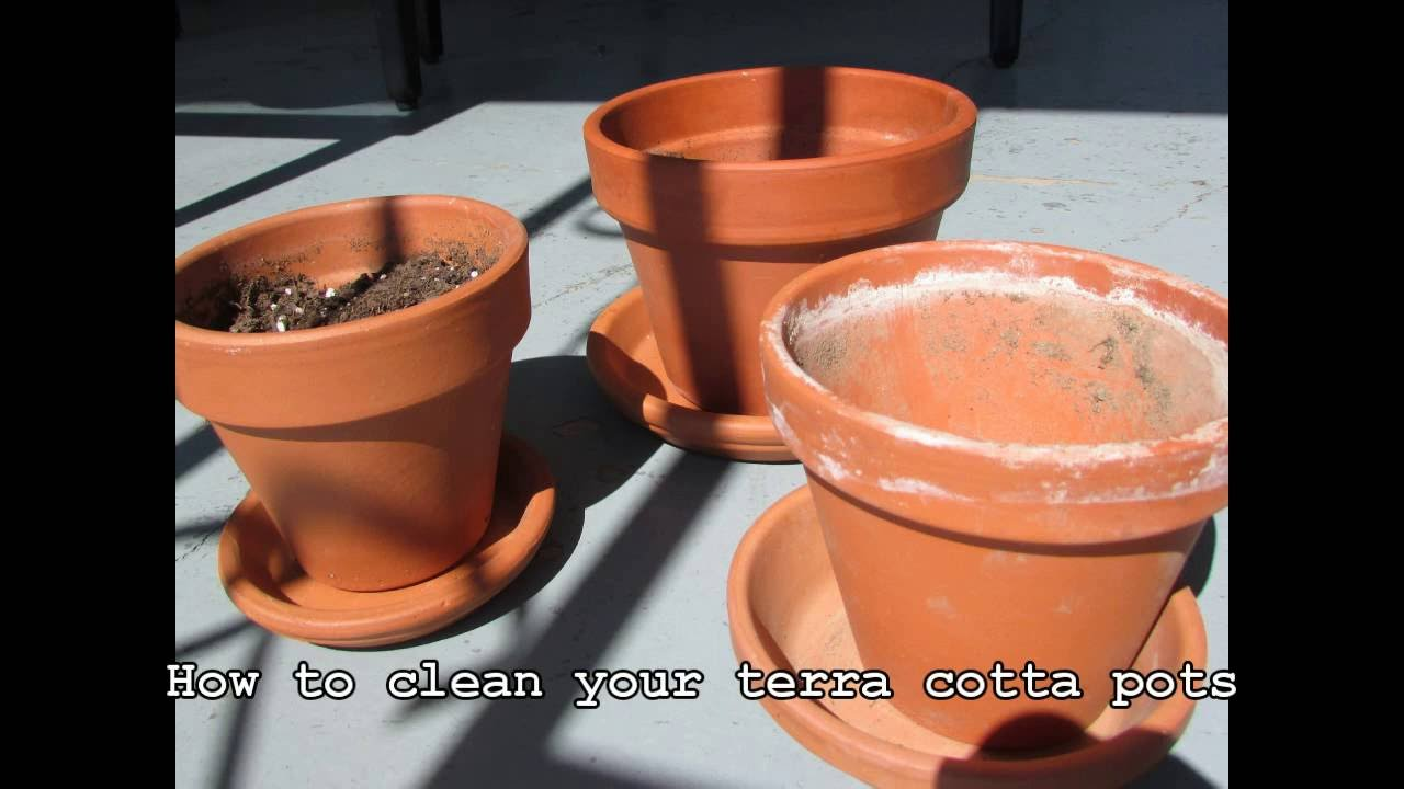 How to clean terra cotta pots   YouTube How to clean terra cotta pots
