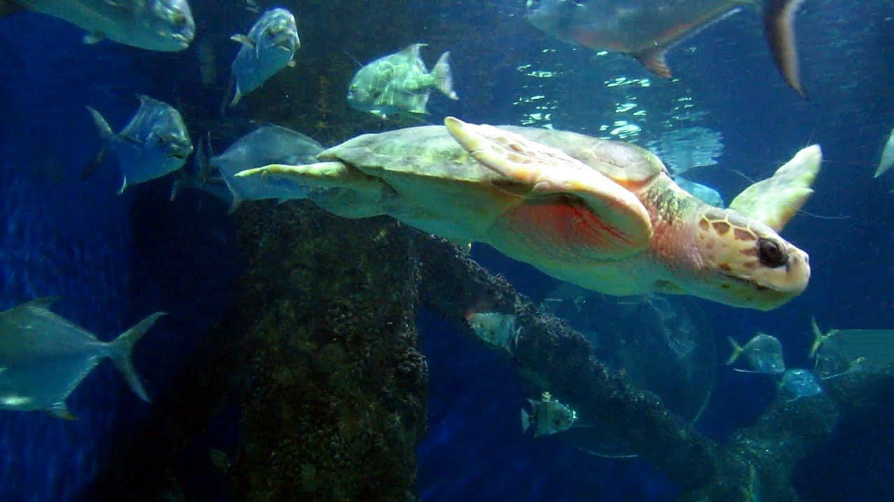 Virginia Beach 24 Of 41 Aquarium Turtles The Big
