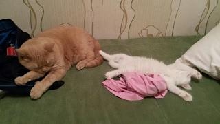 В доме два кота