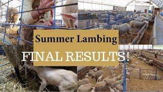 The Last Days of Summer Lambing 2019 (FINAL RESULTS): Vlog 150