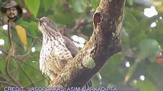 16 Beautiful Birds of India.