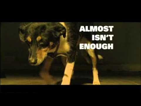 Scottish SPCA Television Advert Ellie.flv