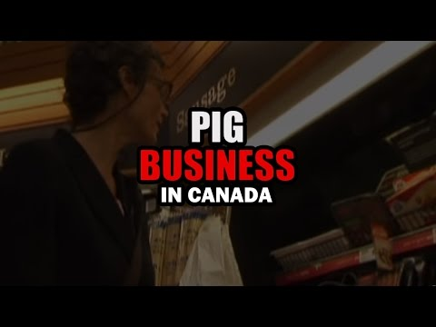 Pig Business In Canada