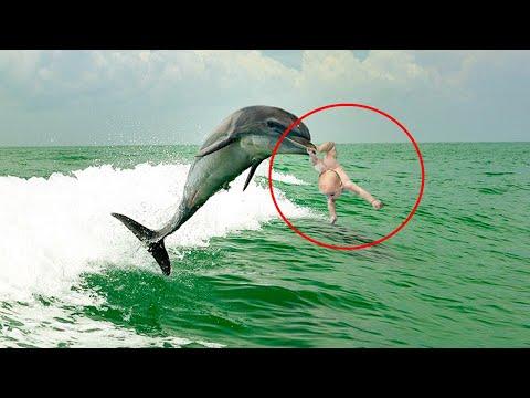 Дельфин в одно движение рассек ноги ребенку, тем самым подарив ей жизнь!