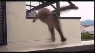 Падение кота!