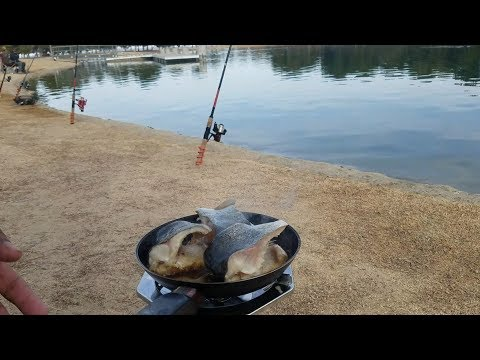 Catch And Cook Rainbow Trout (Apollo Lake)
