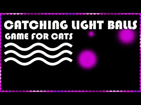 ENTERTAINMENT VIDEO FOR CATS. Cat Game on Screen. Catching Pink Ball.